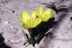 flower-1708566_1280
